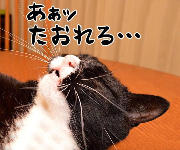今、猫さんに売れてますッ!! 猫の写真で4コマ漫画 3コマ目ッ