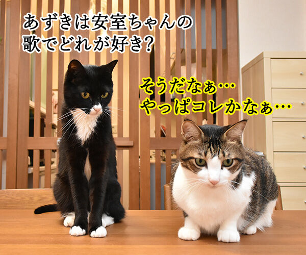 安室ちゃんの歌でどれが好き? 猫の写真で4コマ漫画 1コマ目ッ