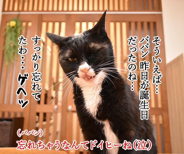 昨日はパパンのお誕生日だったのよッ 猫の写真で4コマ漫画 1コマ目ッ