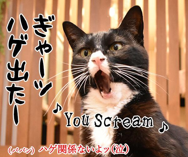 『夏のお嬢さん』はチュウ チュウチュチュなのッ 猫の写真で4コマ漫画 5コマ目ッ