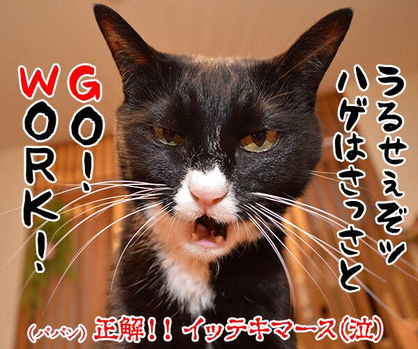 「GW」って何の略かしらッ? 猫の写真で4コマ漫画 4コマ目ッ