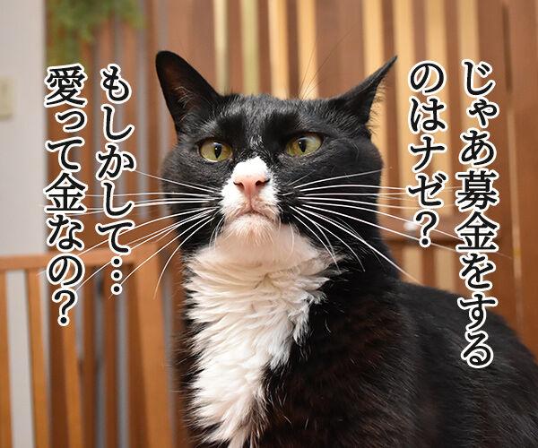 愛は地球を救えるのかしら? 猫の写真で4コマ漫画 2コマ目ッ