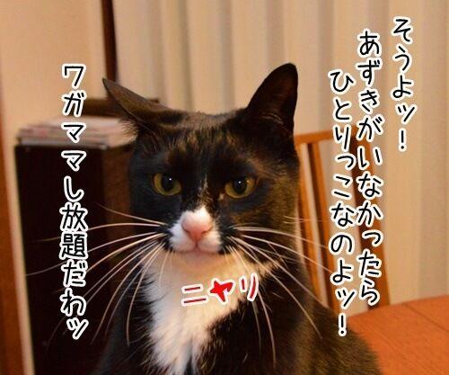 ひとりっこ 猫の写真で4コマ漫画 3コマ目ッ