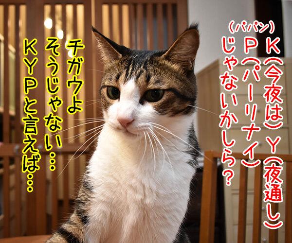 靴店の壁に「KYP」落書き 19歳少年逮捕 猫の写真で4コマ漫画 3コマ目ッ