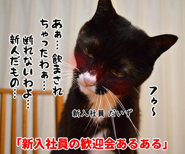 新入社員の歓迎会あるある 猫の写真で4コマ漫画 1コマ目ッ