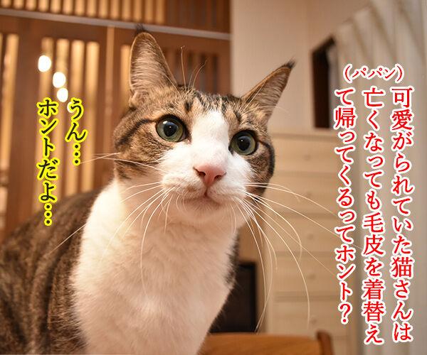 毛皮を着替えて帰ってきてねッ 猫の写真で4コマ漫画 1コマ目ッ