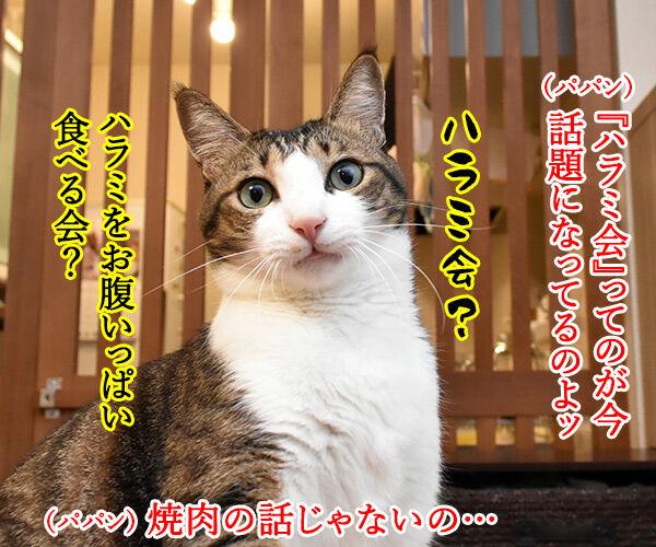 ハラミ会って美味しいのー? 猫の写真で4コマ漫画 1コマ目ッ