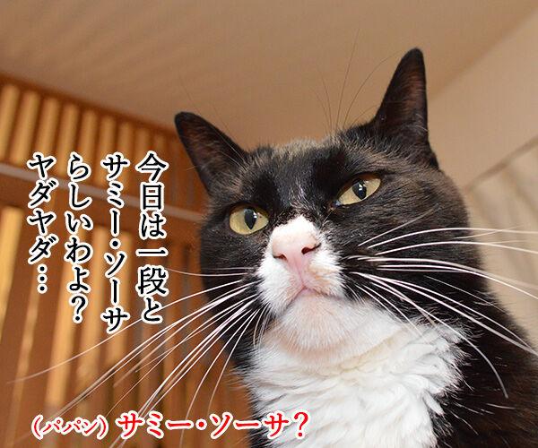 きょうは一段とサミー・ソーサらしいわよ? 猫の写真で4コマ漫画 1コマ目ッ