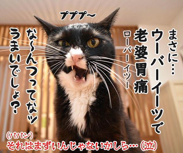 ウーバーイーツでうまいでしょ? 猫の写真で4コマ漫画 4コマ目ッ