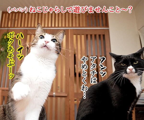 ねこじゃらしで遊びませんこと~?? 猫の写真で4コマ漫画 1コマ目ッ