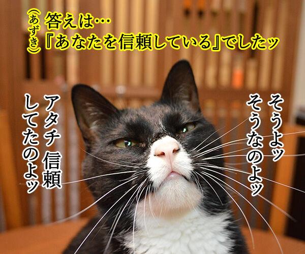 教えてッ あずき先生ッ 猫の写真で4コマ漫画 3コマ目ッ