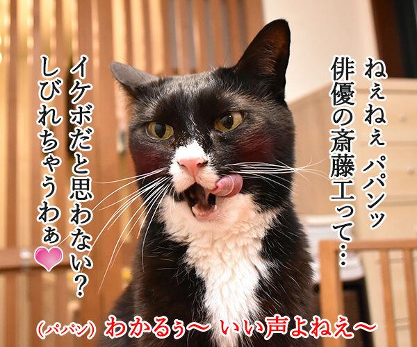 アタチ イケボにしびれちゃうのッ 猫の写真で4コマ漫画 1コマ目ッ