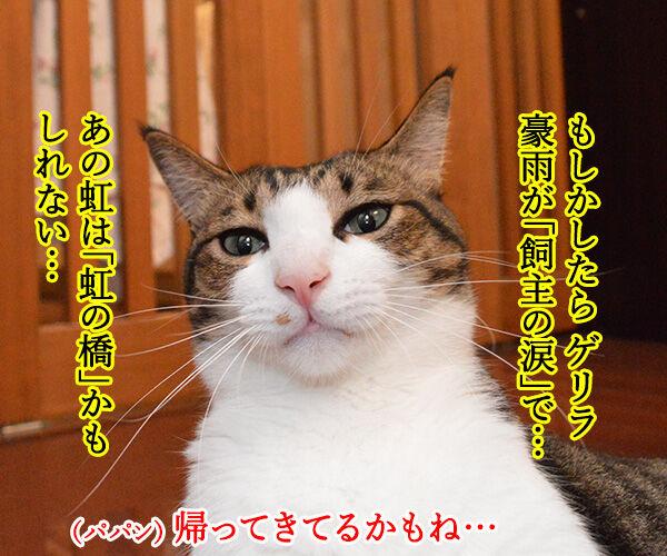 ゲリラ豪雨がやんだら? 猫の写真で4コマ漫画 3コマ目ッ