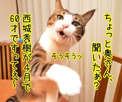 ちょっと奥さん、聞いたぁ? 猫の写真で4コマ漫画 1コマ目ッ