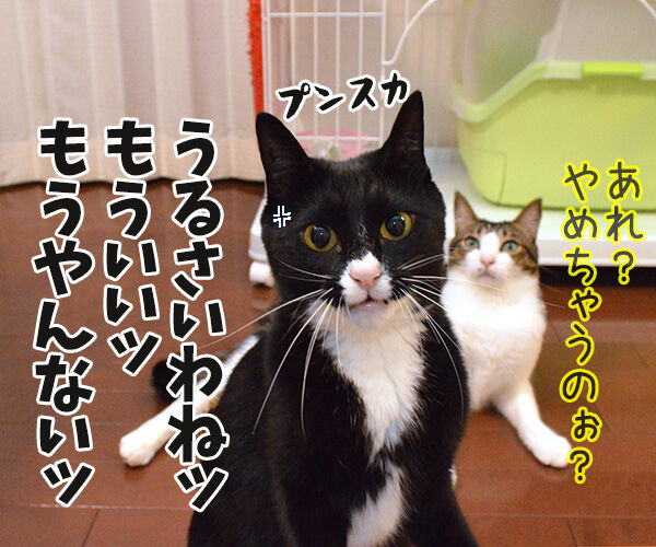 アドバイス 猫の写真で4コマ漫画 3コマ目ッ