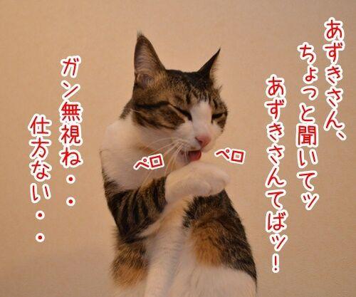 あずきさんを呼ぶとき 猫の写真で4コマ漫画 3コマ目ッ