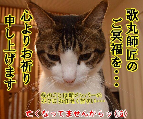 「笑点」新司会は春風亭昇太さんに決定ですってッ 猫の写真で4コマ漫画 4コマ目ッ