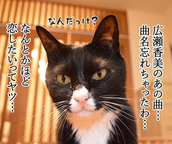 ゲレンデがとけるほど恋したい 猫の写真で4コマ漫画 1コマ目ッ