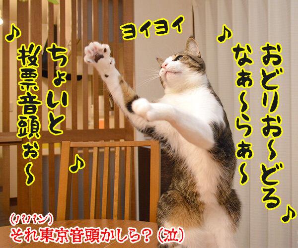 7月5日は投票に行くわよッ 猫の写真で4コマ漫画 4コマ目ッ