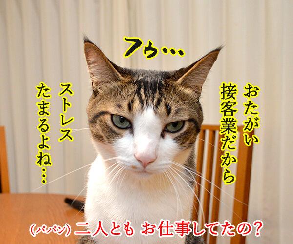 パパンの知らない二人のお仕事 猫の写真で4コマ漫画 2コマ目ッ
