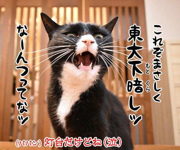東大教授が腎臓病に効く薬を開発してるんですってッ 猫の写真で4コマ漫画 4コマ目ッ