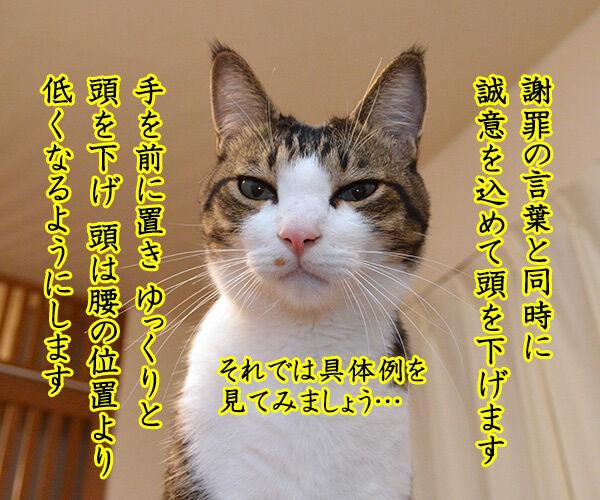 あずき先生のビジネスマナー講座「誠意が伝わる謝罪の仕方」 猫の写真で4コマ漫画 3コマ目ッ