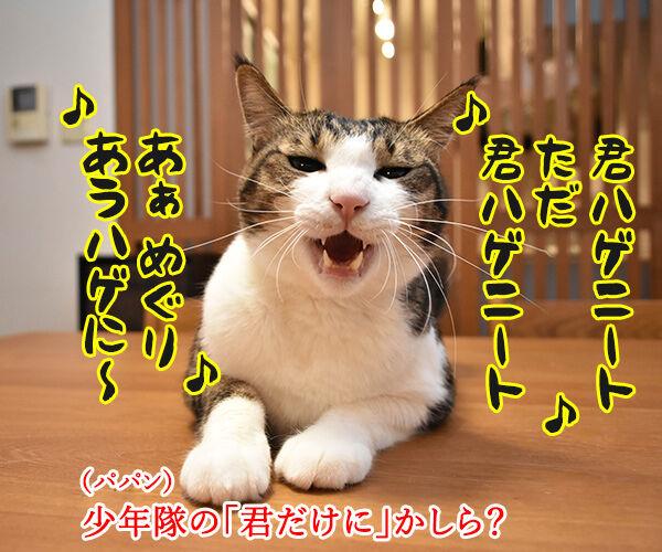 パパンはひきこもりニートってウワサなのッ 猫の写真で4コマ漫画 3コマ目ッ