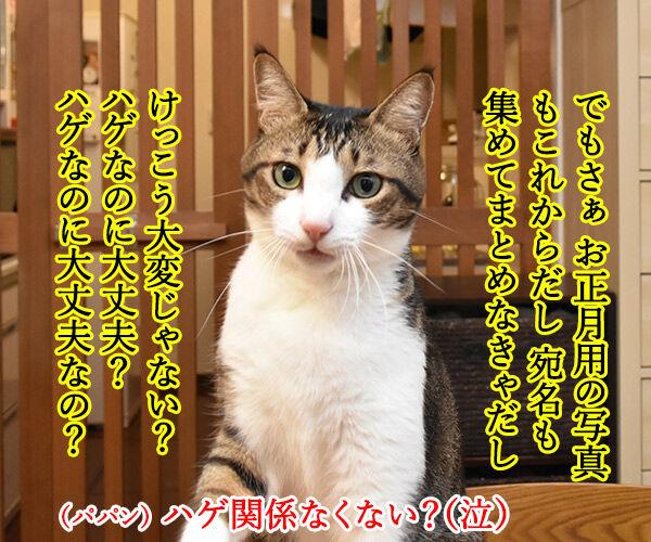 『あずだいを拡散してくれたら 年賀状を送っちゃうわよー キャンペーン』応募してねーッ 猫の写真で4コマ漫画 3コマ目ッ