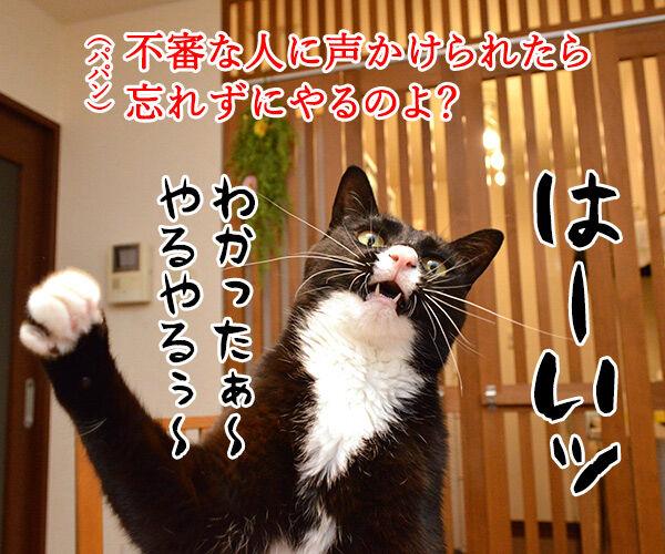 「いかのおすし」って知ってる? 猫の写真で4コマ漫画 3コマ目ッ