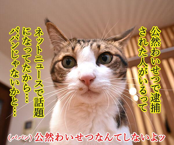 パパンの帰りが遅いから… 猫の写真で4コマ漫画 3コマ目ッ