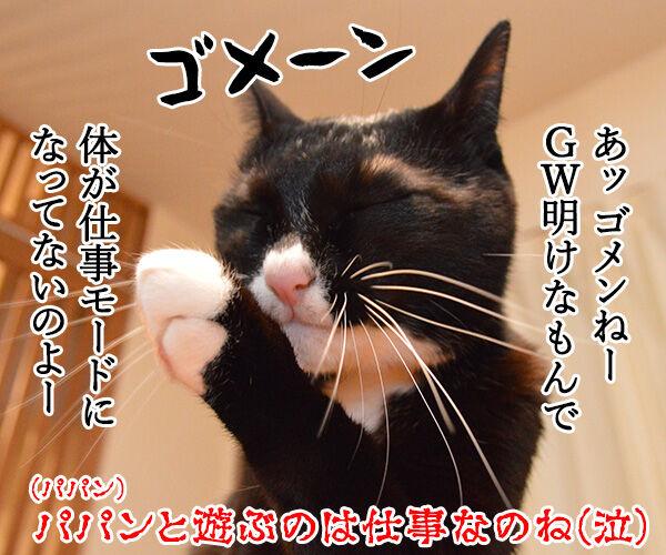 きょうは5月7日だから 猫の写真で4コマ漫画 4コマ目ッ