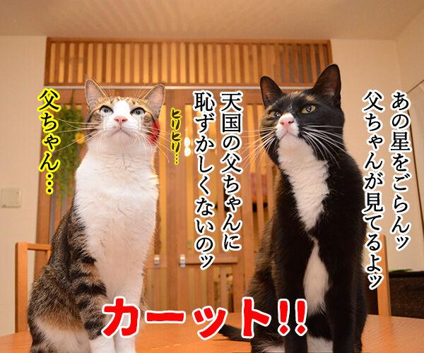 あずだいテレビ小説『おかあちゃん』 猫の写真で4コマ漫画 3コマ目ッ
