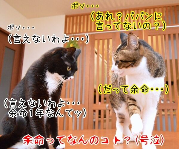 ネコの平均寿命が延びてるんですってッ 猫の写真で4コマ漫画 4コマ目ッ