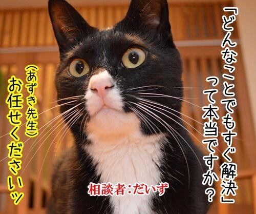 どんなことでもすぐ解決 猫の写真で4コマ漫画 1コマ目ッ