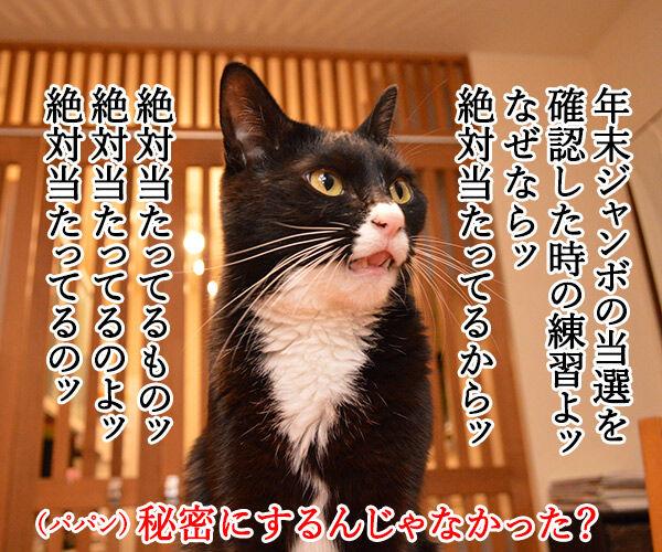 えっ?ウソ?当たってる…… 猫の写真で4コマ漫画 3コマ目ッ