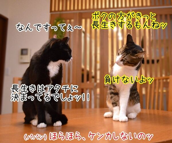 世界最長寿の猫Scooterさんが永眠 30歳でした 猫の写真で4コマ漫画 3コマ目ッ