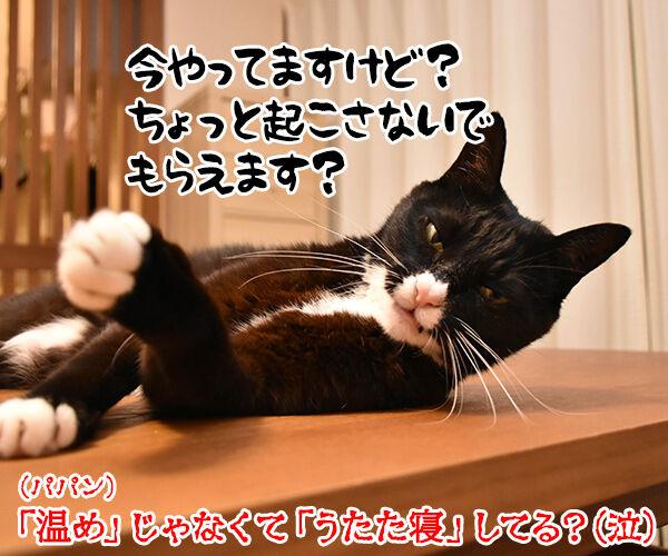 あずだいマートでお買い物 其の二 猫の写真で4コマ漫画 4コマ目ッ
