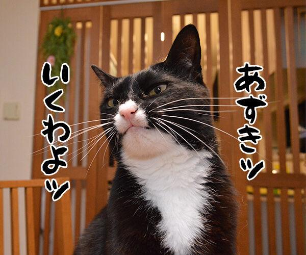 あずきッ いくわよッ 猫の写真で4コマ漫画 1コマ目ッ