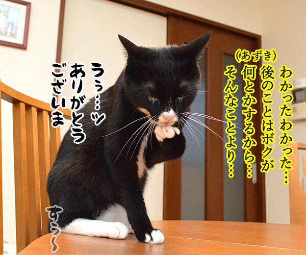 OLだいずの大失敗 猫の写真で4コマ漫画 3コマ目ッ