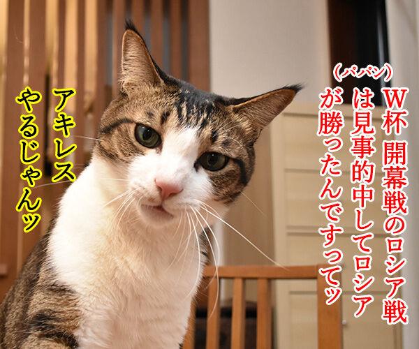 予言猫アキレスはW杯開幕戦を見事的中なのッ 猫の写真で4コマ漫画 2コマ目ッ