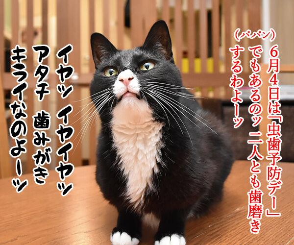 6月4日は何の日でしょうかッ? 猫の写真で4コマ漫画 3コマ目ッ