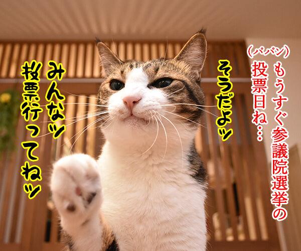 不在者投票に行ったのに? 猫の写真で4コマ漫画 1コマ目ッ