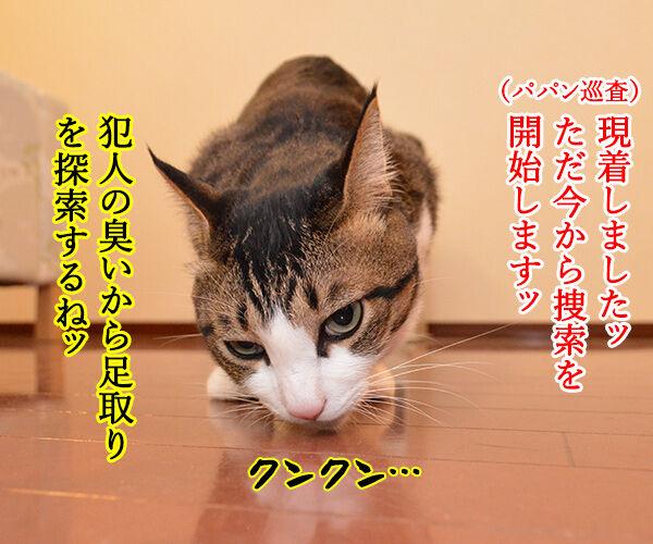 警察猫 あずき 猫の写真で4コマ漫画 2コマ目ッ