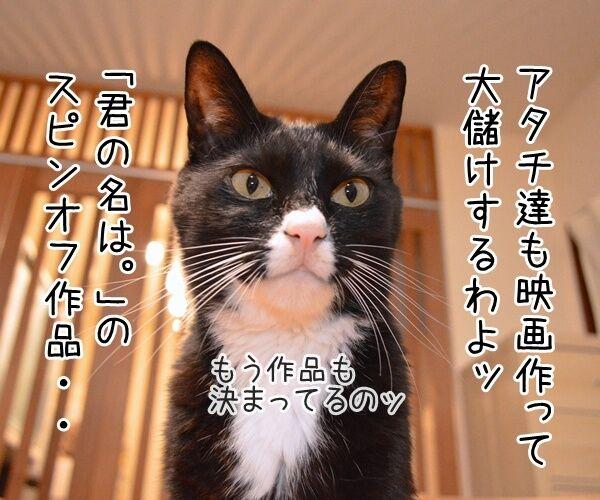 映画『君の名は。』の興行収入が62億円突破なんですってッ 猫の写真で4コマ漫画 3コマ目ッ