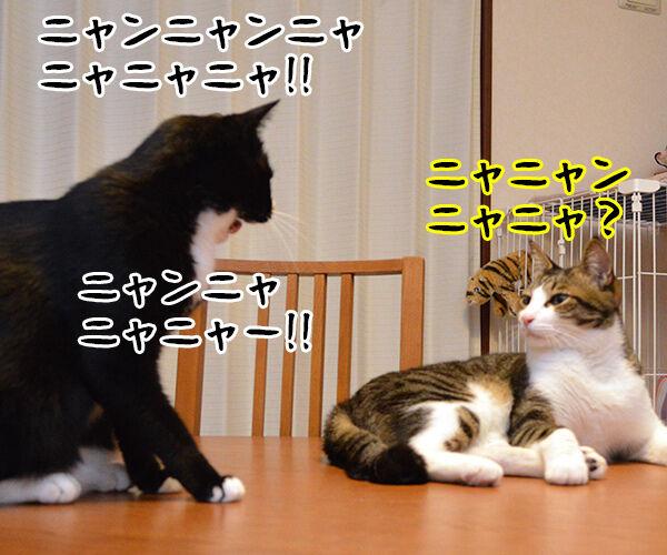 ニャニャニャ 猫の写真で4コマ漫画 2コマ目ッ