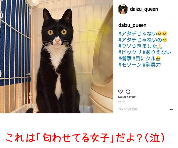 イケメン俳優の竹内涼真さんが匂わせで熱愛発覚なんですってッ 猫の写真で4コマ漫画 4コマ目ッ