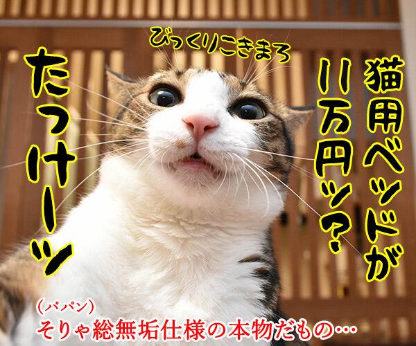 ネコ用ベッドが欲しいのよッ 猫の写真で4コマ漫画 2コマ目ッ
