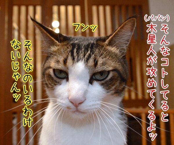 探査機ジュノーが木星到達なんですってッ 猫の写真で4コマ漫画 3コマ目ッ