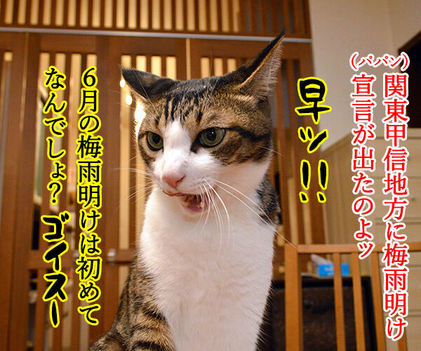 関東甲信地方は梅雨明けなんですってッ 猫の写真で4コマ漫画 1コマ目ッ