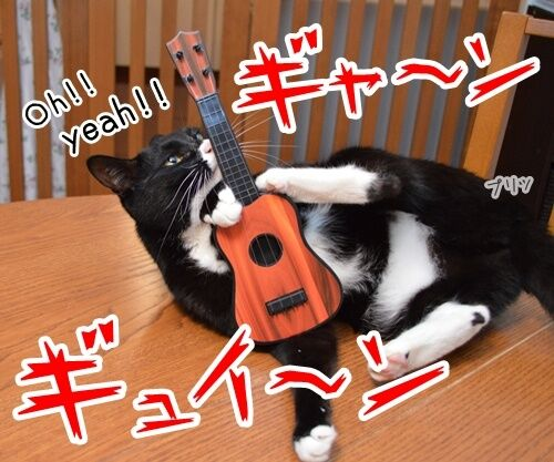 音楽っていいねッ 猫の写真で4コマ漫画 1コマ目ッ